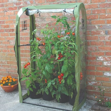 Tomato crop booster poly cover