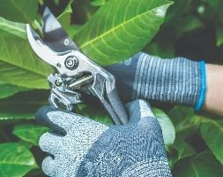 Showa gardening gloves 381