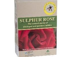 Sulphur rose - 250g