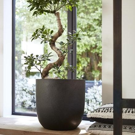 Cadix black egg planter