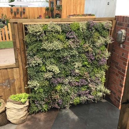 Wonderwall vertical planting starter kit