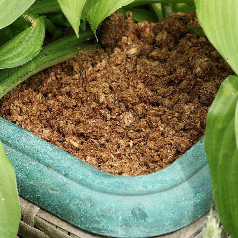 Slugless - pet safe spiky slug & snail deterrent