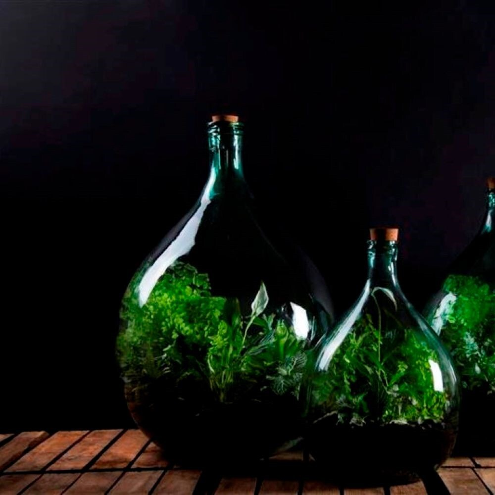 Plant terrarium bottle 15 litre set