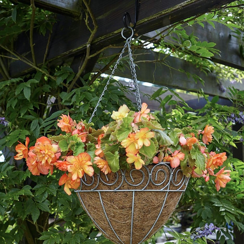 Scrolled cone hanging basket