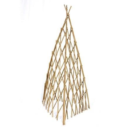 Willow acacia wigwam