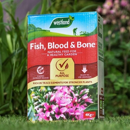 Fish blood and bone