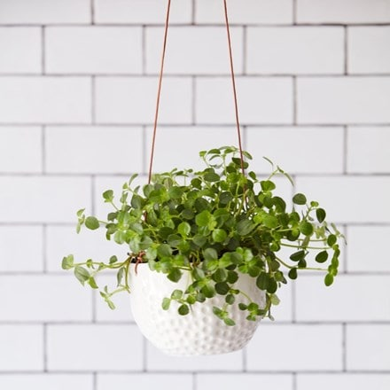 Hanging pot - dot