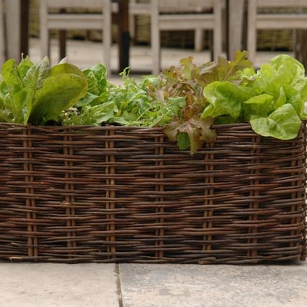 Salad planting bag with natural willow surround