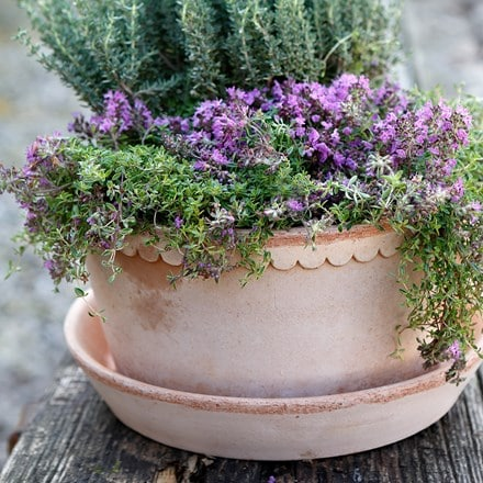 Helena grey herb pot