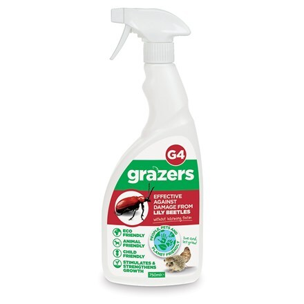 Grazers G4 - lily beetle