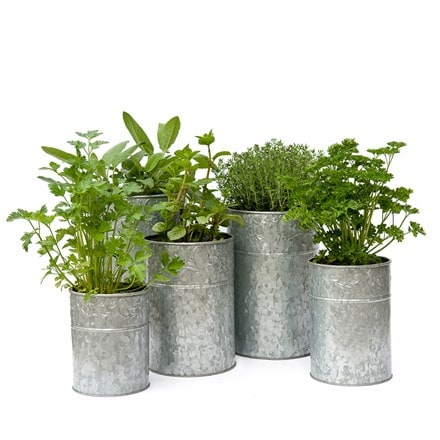 Galvanised metal planters - set of 5 & cooking herbs