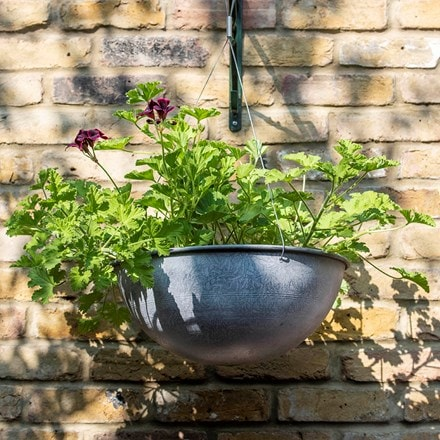 Hanging bowl - aged zinc & regal pelargoniums