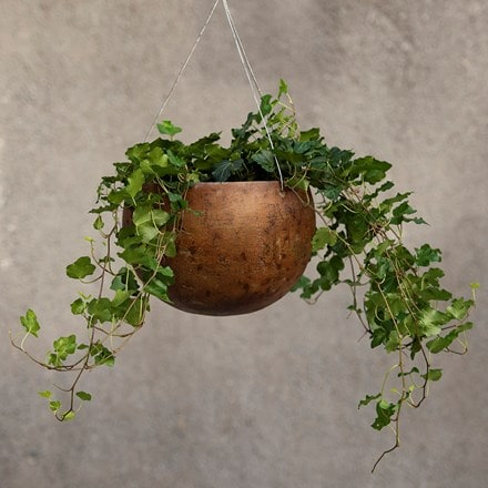 Hanging gourd bowl - small & English ivy