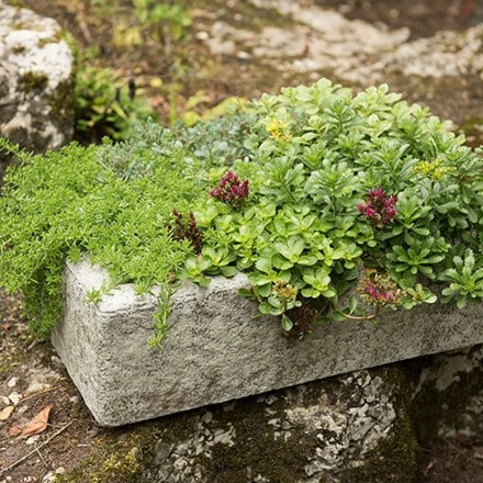 Alpine trough
