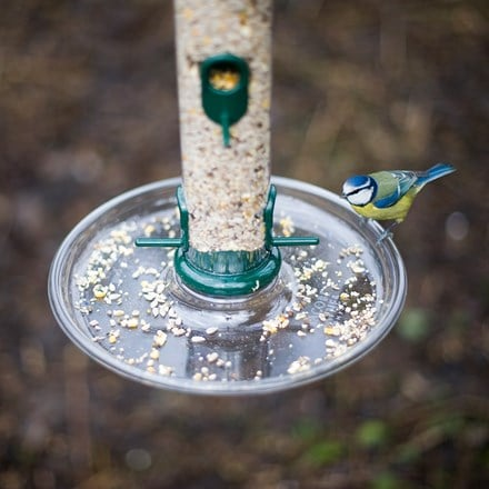 Large bird food tray