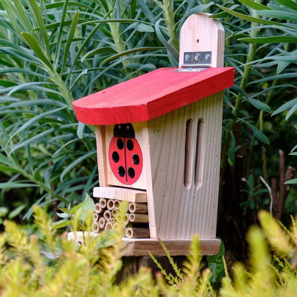 Ladybird and insect lodge
