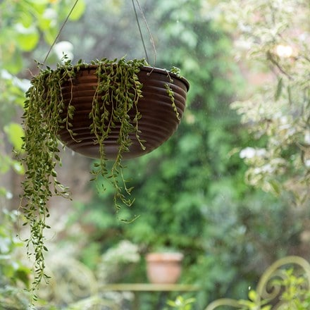 Hanging ribbed bowl & string of beads (syn. senecio herreianus)