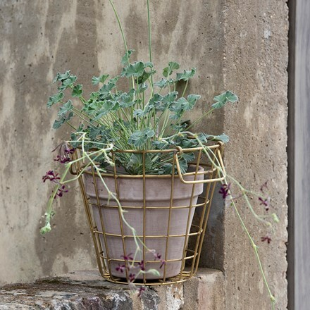Brass pot basket & vaso taupe classic pot with species pelargoniums