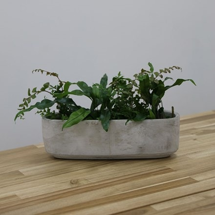 Tivoli trio planter cement