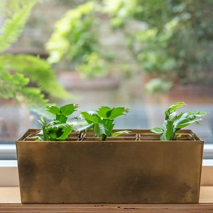Brass tray with 6 brass grow pods