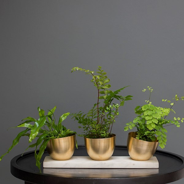 Three brass tilt pots on a slab of white marble