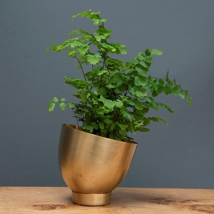 Mini brass tilting pot with saucer