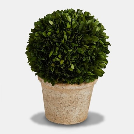 Topiary ball with terracotta round pot