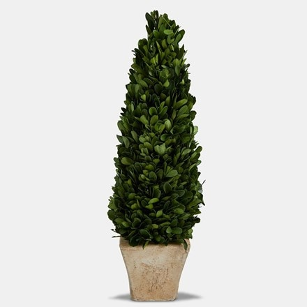 Topiary cone with terracotta round pot