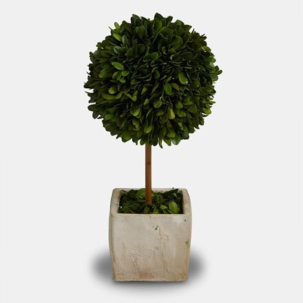 Topiary tree with terracotta square pot