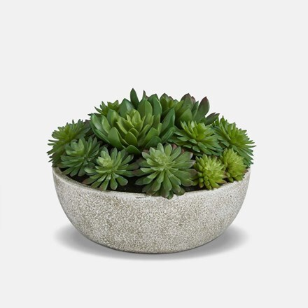 Mixed echeveria bowl