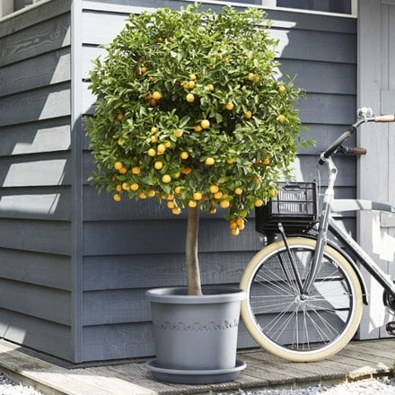 Algarve cilindro anthracite wheeled pot