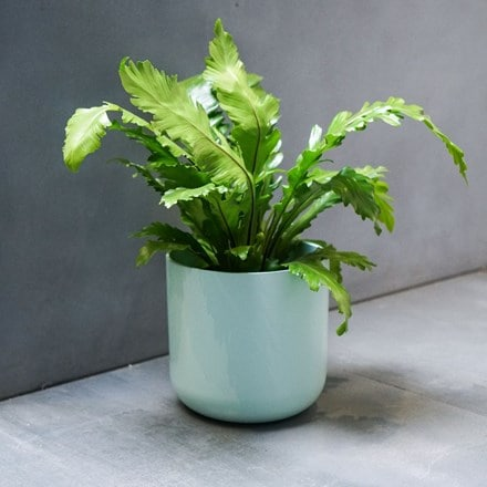 Lisbon planter mint green