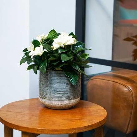 Vasto denim planter
