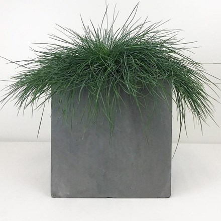 Square box contemporary grey light concrete planter