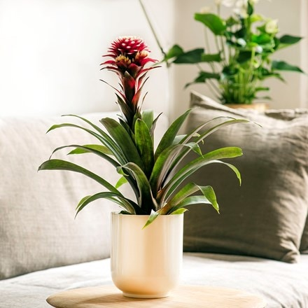 Off white pot cover with enamel interior