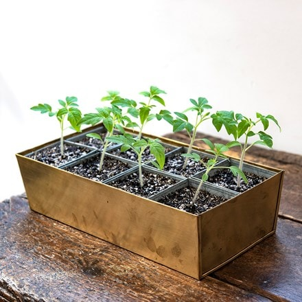 Brass tray with grow pods