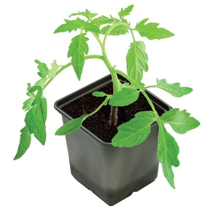 Bio-based growing pots square - pack of 5