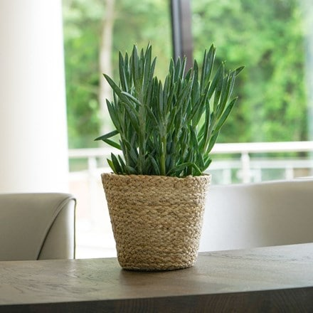 Bergen jute natural lined planter