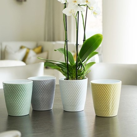 Orsa orchid pot grey